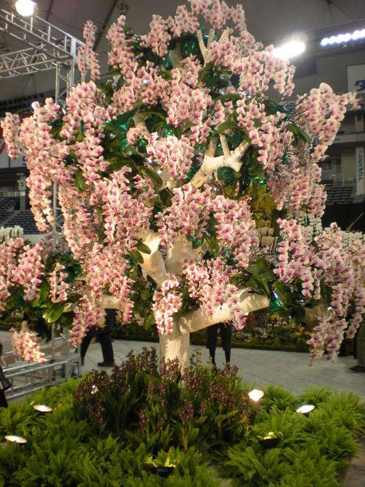 orchid%20tree.JPG